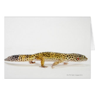 Side view of leopard gecko lizard card