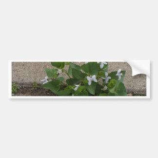Sidewalk Flower Bumper Sticker