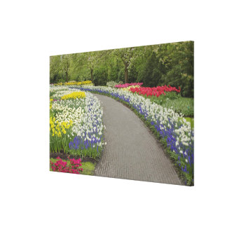 Sidewalk pathway through tulips and daffodils, 2 canvas print