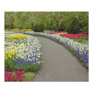 Sidewalk pathway through tulips and daffodils, 2 photo