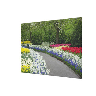 Sidewalk pathway through tulips and daffodils, stretched canvas print