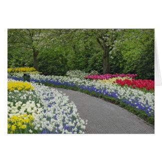 Sidewalk pathway through tulips and daffodils, card