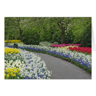 Sidewalk pathway through tulips and daffodils, greeting card