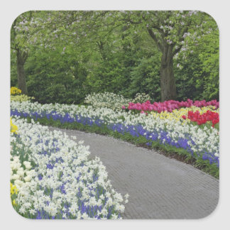 Sidewalk pathway through tulips and daffodils, square sticker