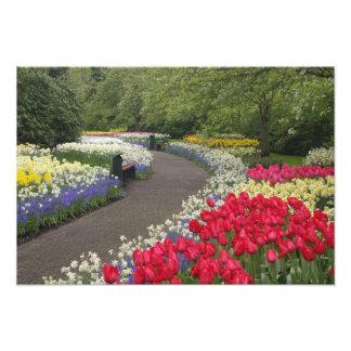 Sidewalk through tulips, daffodils, and art photo