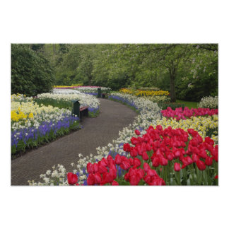 Sidewalk through tulips, daffodils, and poster