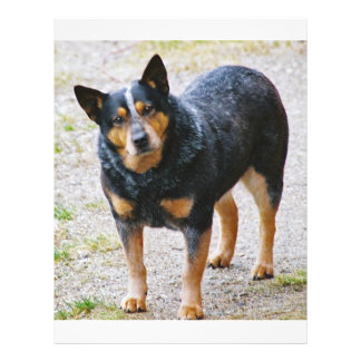 Sidney the Blue Heeler Personalized Flyer