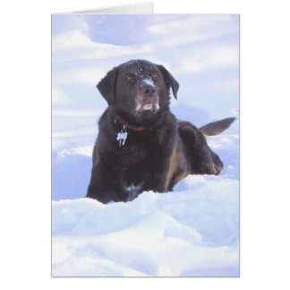 """Sidney the Wonder Dog"" Greeting Card"