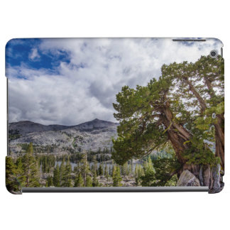 Sierra Juniper and Evergreen Trees