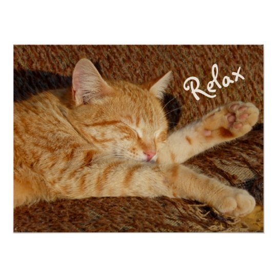 Siesta - Relaxing Cat Poster