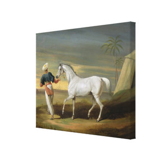 Signal, a grey Arab, with a Groom in the Desert (o Canvas Print