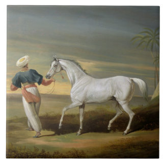 Signal, a grey Arab, with a Groom in the Desert (o Tile