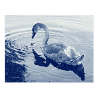 Signet Swan - Digital Cyanotype Post Cards