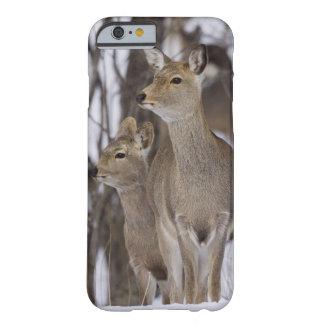 Sikaのシカの雌ジカおよび若いの北海道、日本 Barely There iPhone 6 Case