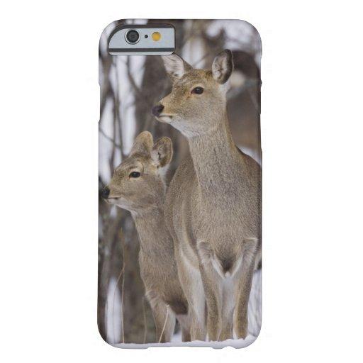 Sikaのシカの雌ジカおよび若いの北海道、日本 iPhone 6 Case