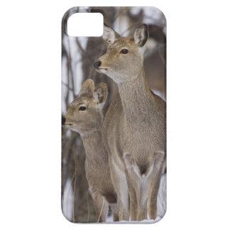 Sikaのシカの雌ジカおよび若いの北海道、日本 iPhone 5 Cover