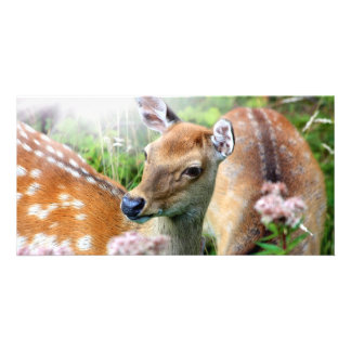 Sika deer close up in the wild customized photo card