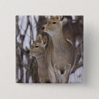 Sika Deer Doe and Young, Hokkaido, Japan 15 Cm Square Badge