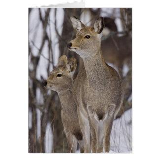 Sika Deer Doe and Young, Hokkaido, Japan Card