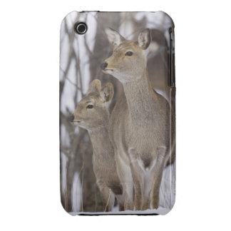 Sika Deer Doe and Young, Hokkaido, Japan Case-Mate iPhone 3 Cases