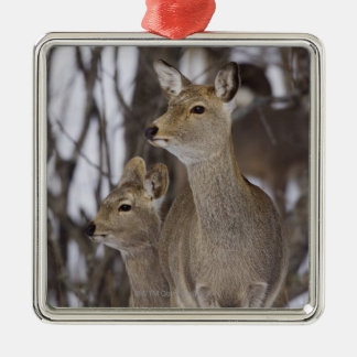 Sika Deer Doe and Young, Hokkaido, Japan Christmas Ornament