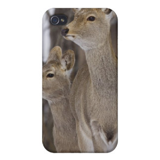 Sika Deer Doe and Young, Hokkaido, Japan iPhone 4/4S Cover