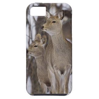 Sika Deer Doe and Young, Hokkaido, Japan iPhone 5 Cover
