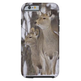 Sika Deer Doe and Young, Hokkaido, Japan Tough iPhone 6 Case