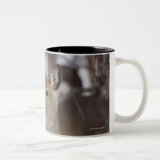 Sika Deer Doe and Young, Hokkaido, Japan Two-Tone Coffee Mug