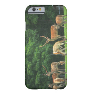 Sika deer standing in a clearing barely there iPhone 6 case