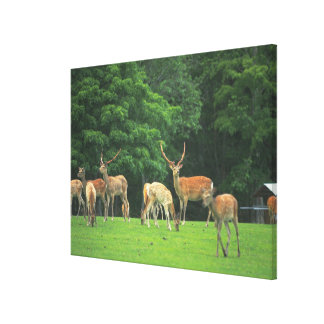 Sika deer standing in a clearing canvas print