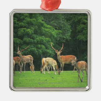 Sika deer standing in a clearing christmas ornament