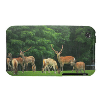 Sika deer standing in a clearing iPhone 3 Case-Mate cases