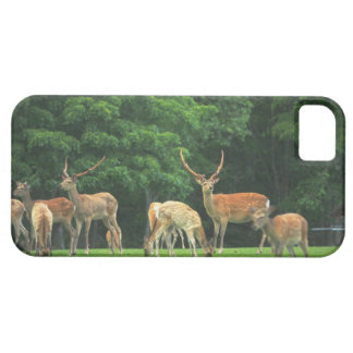 Sika deer standing in a clearing iPhone 5 cases