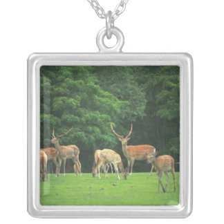 Sika deer standing in a clearing silver plated necklace