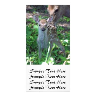 Sika fawn and mother photo card