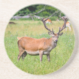 Silent Stag Coaster