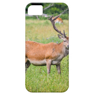 Silent Stag iPhone 5 Cases