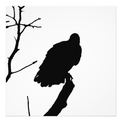 Silhouette Black & White Vulture Bird of Prey Photographic Print