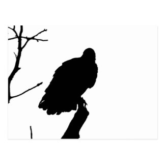 Silhouette Black & White Vulture Bird of Prey Postcard