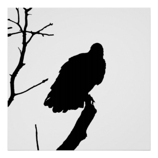 Silhouette Black & White Vulture Bird of Prey Posters