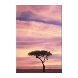 Silhouette image of acacia tree at sunrise canvas print