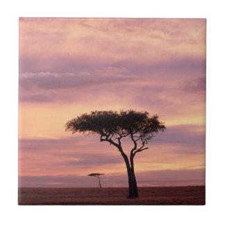 Silhouette image of acacia tree at sunrise tile