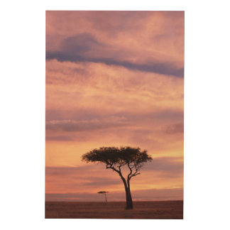 Silhouette image of acacia tree at sunrise wood wall decor