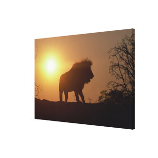 Silhouette of a lion canvas print