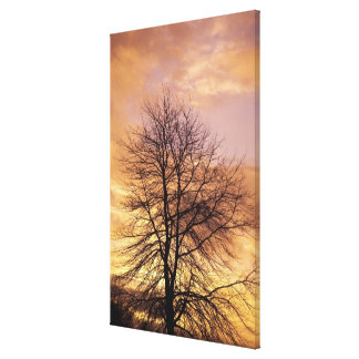 Silhouette of a Tree with Pink and Orange Sky Canvas Print