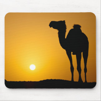 Silhouette of a wild camel at sunset mouse mat