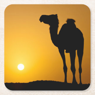 Silhouette of a wild camel at sunset square paper coaster