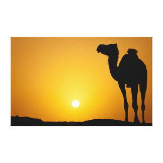 Silhouette of a wild camel at sunset stretched canvas prints