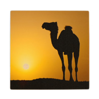 Silhouette of a wild camel at sunset wood coaster